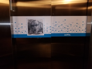 sticky back vinyl on elevator