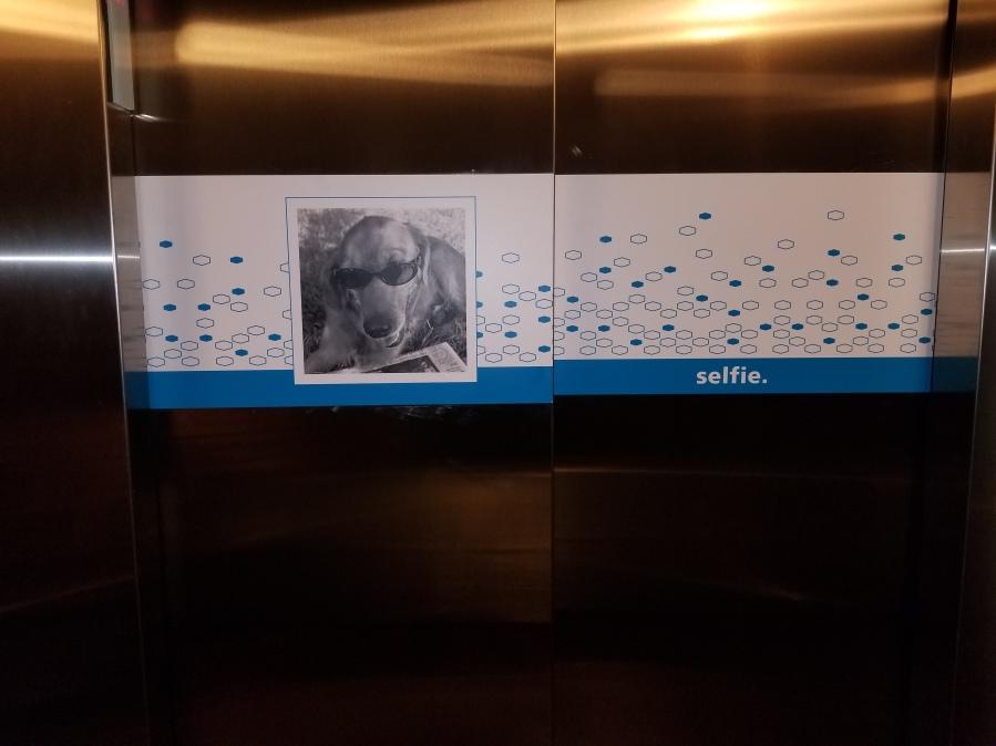 sticky back vinyl on elevator